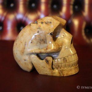 STONEHENGE SKULL, sarson from Stonehenge sacred site. life size © S V Mitchell